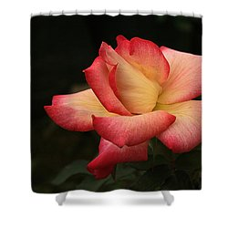 Skc 0432 Blooming And Blossoming Shower Curtain