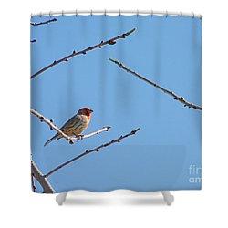 Sky Blue Beauty Shower Curtain by Meghan at FireBonnet Art