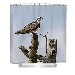 Sky Hunter 2 Shower Curtain by David Lester