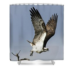 Sky Hunter Shower Curtain by David Lester