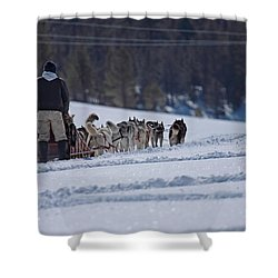 Sled Dog  Shower Curtain by Duncan Selby