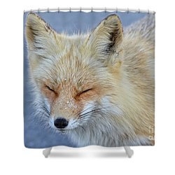 Sleep Walking Shower Curtain by Sami Martin