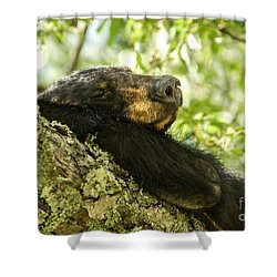 Sleeping Bear Shower Curtain by Debbie Green