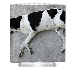Sleeping Dog Lying On The Ground Shower Curtain by Matthias Hauser