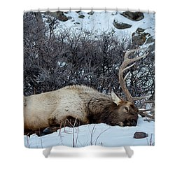 Sleeping Elk Shower Curtain