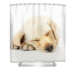 Sleeping Labrador Puppy Shower Curtain