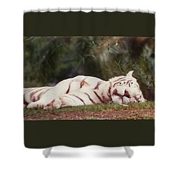 Sleeping White Snow Tiger Shower Curtain
