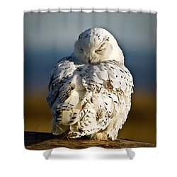 Sleeping Snowy Owl Shower Curtain by Steve McKinzie