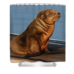 Sleeping Wild Sea Lion Pup  Shower Curtain