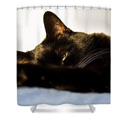 Sleeping With One Eye Open Shower Curtain by Bob Orsillo