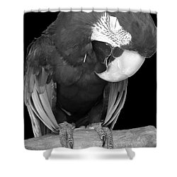 Sleepy Bird  There Is A Nap For That B And W Shower Curtain by Barbie Corbett-Newmin