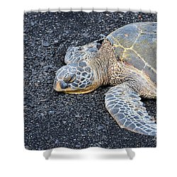 Shower Curtain featuring the photograph Sleepy Head by David Lawson