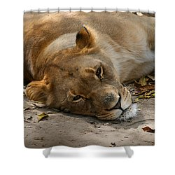 Shower Curtain featuring the photograph Sleepy Lioness by Ann Lauwers
