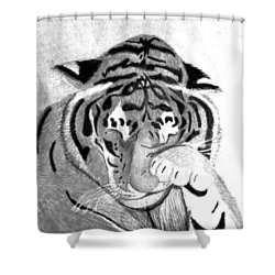 Sleepy Tiger Shower Curtain