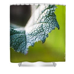 Slice Of Leaf Shower Curtain