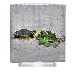 Slider And Sorrel In Sand Shower Curtain by Al Powell Photography USA