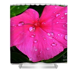 Shower Curtain featuring the photograph Sliders by Patti Whitten