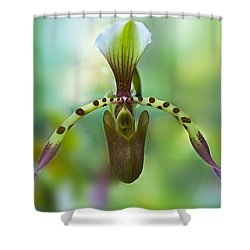 Slipper Orchid Of Selby Gardens Shower Curtain