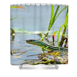 Slither Shower Curtain