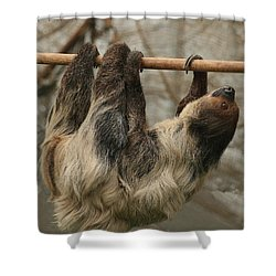 Sloth Shower Curtain by Ellen Henneke