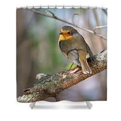 Small Bird Robin Shower Curtain