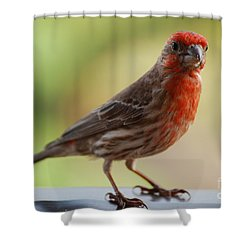 Small Brown And Red Bird Shower Curtain by DejaVu Designs