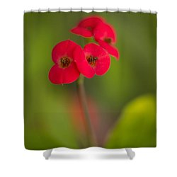 Small Red Flowers With Blurry Background Shower Curtain