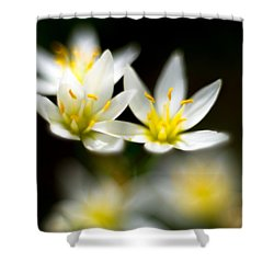 Small White Flowers Shower Curtain by Darryl Dalton