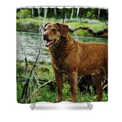 Smile Now Shower Curtain by Donna Blackhall