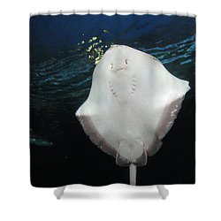 Smiley Ray Shower Curtain