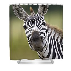 Shower Curtain featuring the photograph Smiling Burchells Zebra by Suzi Eszterhas