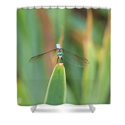 Smiling Dragonfly Shower Curtain by Karen Silvestri