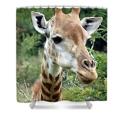 Smiling Giraffe Shower Curtain by Ramona Johnston