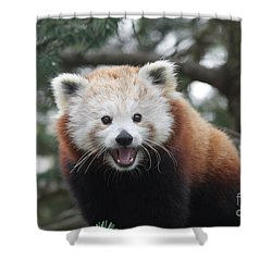 Smiling Red Panda Shower Curtain by Judy Whitton