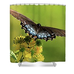 Smoky Mountain Color Shower Curtain by Douglas Stucky