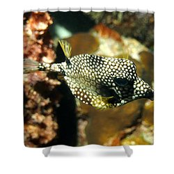 Smooth Trunkfish Shower Curtain by Amy McDaniel