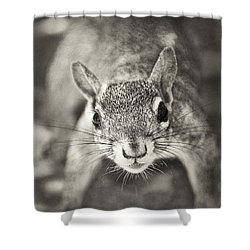 Snack Time Shower Curtain by Patrick M Lynch