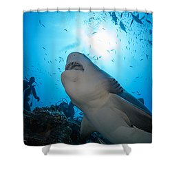 Snacking Bull Shark Shower Curtain by Dave Fleetham