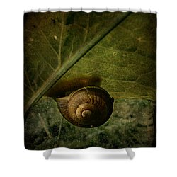 Snail Camp Shower Curtain