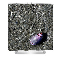 Shower Curtain featuring the photograph Snail's Pace by Lisa Phillips