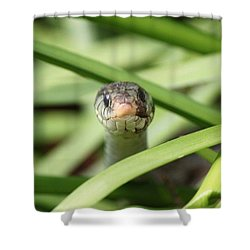 Snake In The Grass Shower Curtain by Jennifer E Doll