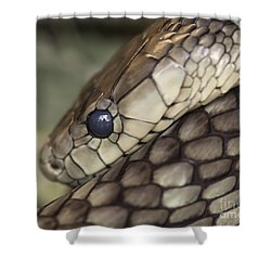 Snake Shower Curtain by Lucid Mood