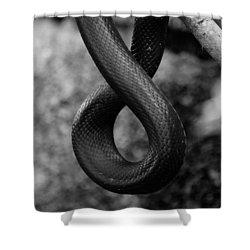 Snake Springs Eternal Shower Curtain