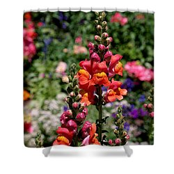 Snapdragons Shower Curtain by Rona Black