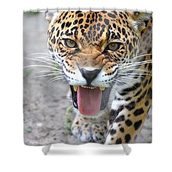Snarling Jaguar  Shower Curtain by Richard Bryce and Family