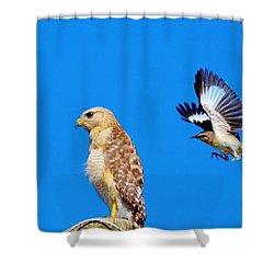Sneak Attack Shower Curtain