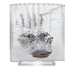 Sneaky Swamp Gator Shower Curtain