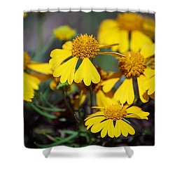 Shower Curtain featuring the photograph Sneezeweed by Ester  Rogers