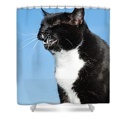 Sneezing Cat Shower Curtain