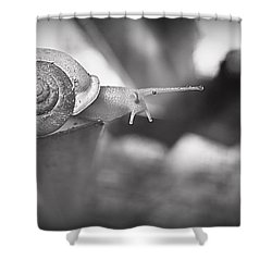 Snips And Snails... Shower Curtain by Tammy Schneider